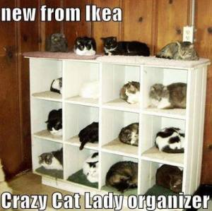 CrazyCatOrganizer